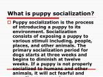 what is puppy socialization