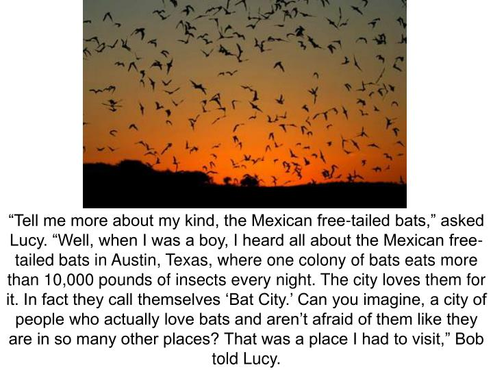 """""""Tell me more about my kind, the Mexican free-tailed bats,"""" asked Lucy. """"Well, when I was a boy, I heard all about the Mexican free-tailed bats in Austin, Texas, where one colony of bats eats more than 10,000 pounds of insects every night. The city loves them for it. In fact they call themselves 'Bat City.' Can you imagine, a city of people who actually love bats and aren't afraid of them like they are in so many other places? That was a place I had to visit,"""" Bob told Lucy."""