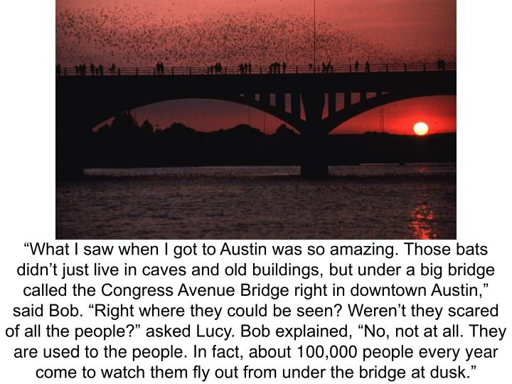 """""""What I saw when I got to Austin was so amazing. Those bats didn't just live in caves and old buildings, but under a big bridge called the Congress Avenue Bridge right in downtown Austin,"""" said Bob. """"Right where they could be seen? Weren't they scared of all the people?"""" asked Lucy. Bob explained, """"No, not at all. They are used to the people. In fact, about 100,000 people every year come to watch them fly out from under the bridge at dusk."""""""
