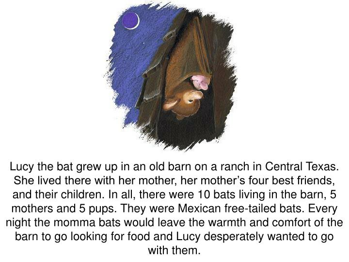Lucy the bat grew up in an old barn on a ranch in Central Texas.  She lived there with her mother, h...