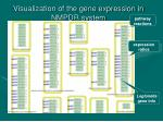 visualization of the gene expression in nmpdr system