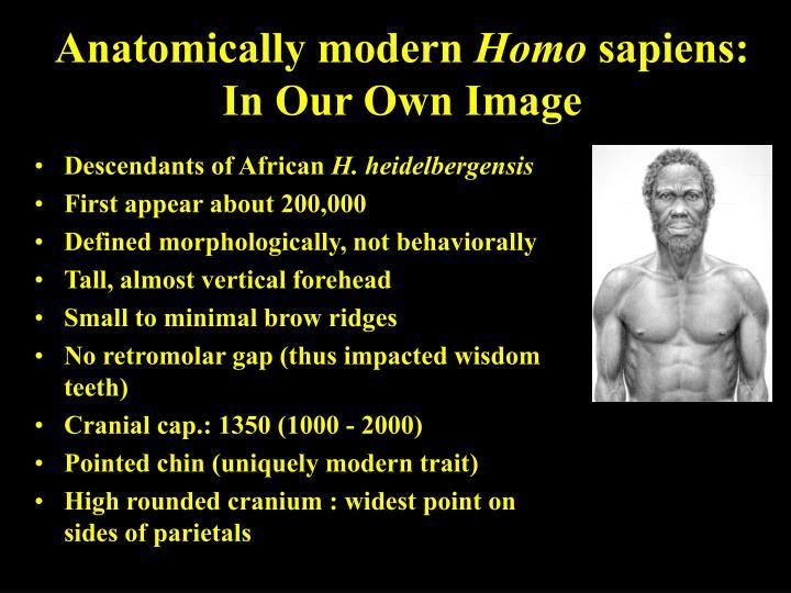 Anatomically modern