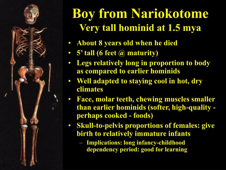 Boy from Nariokotome