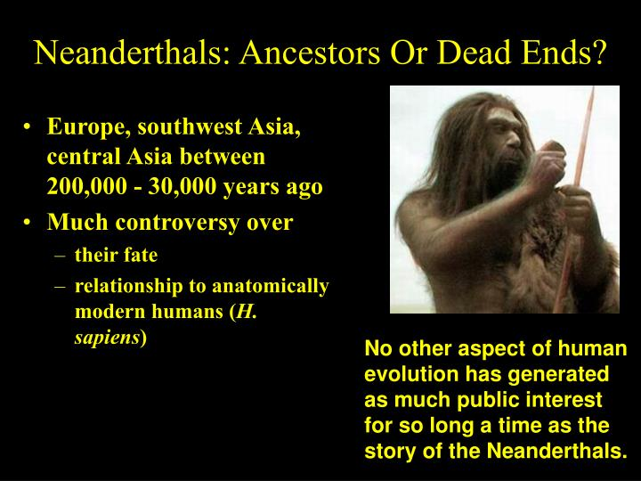 Neanderthals: Ancestors Or Dead Ends?