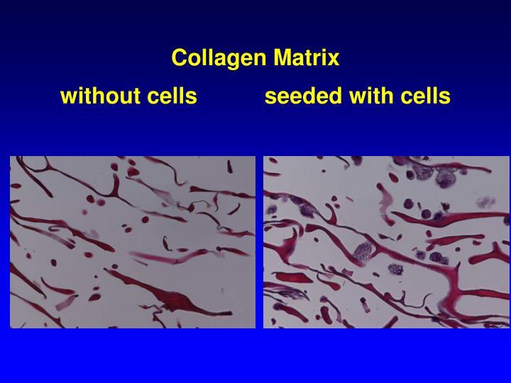 Collagen Matrix