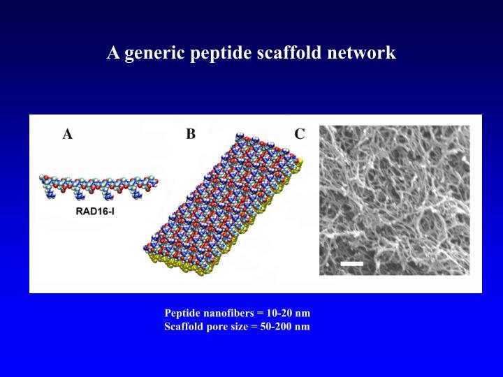 A generic peptide scaffold network
