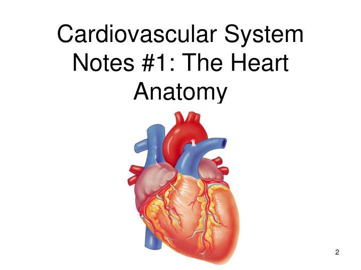 Cardiovascular system notes 1 the heart anatomy