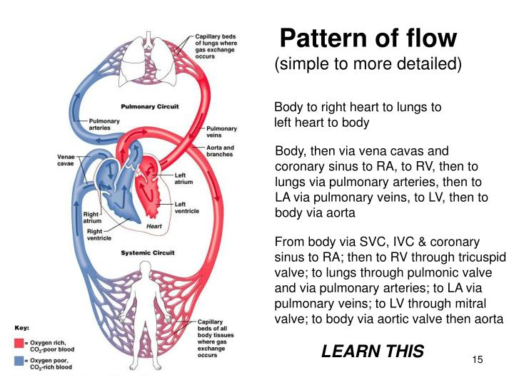 Pattern of flow