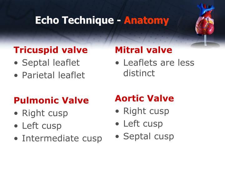 Echo technique anatomy