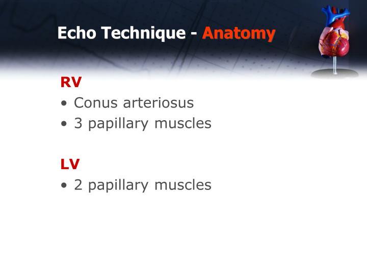 Echo technique anatomy1