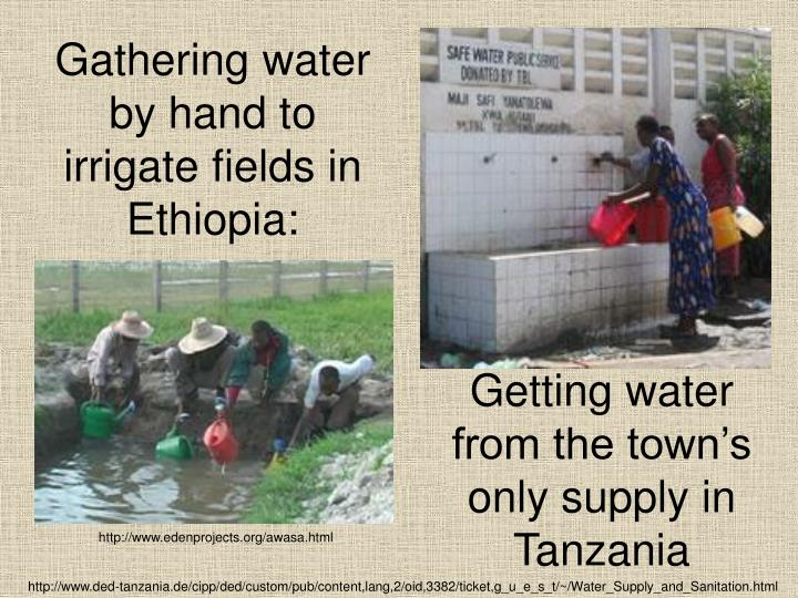 Gathering water by hand to irrigate fields in Ethiopia: