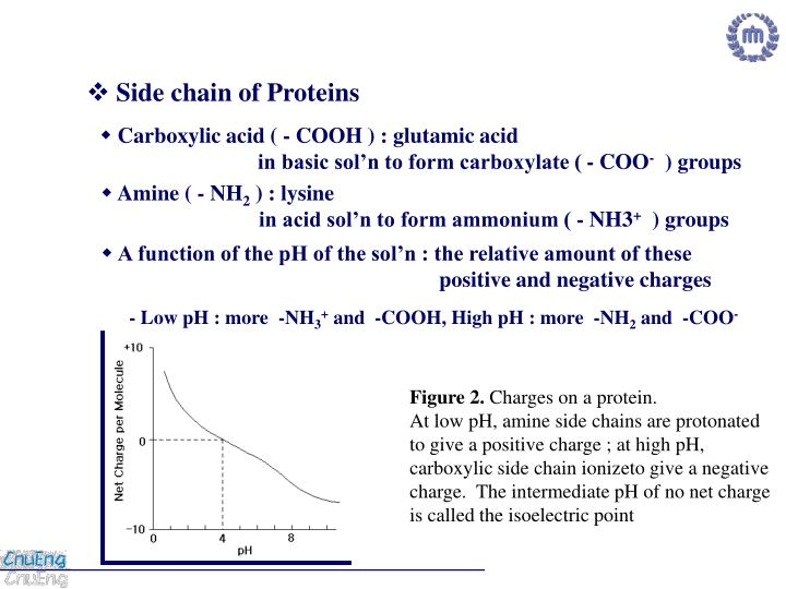 Side chain of Proteins