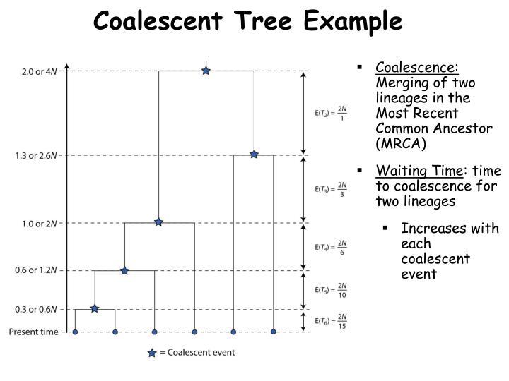 Coalescent Tree Example