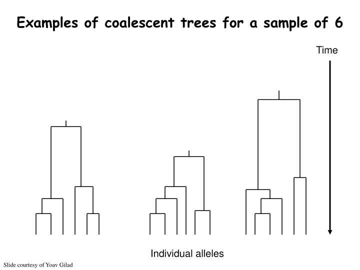 Examples of coalescent trees for a sample of 6