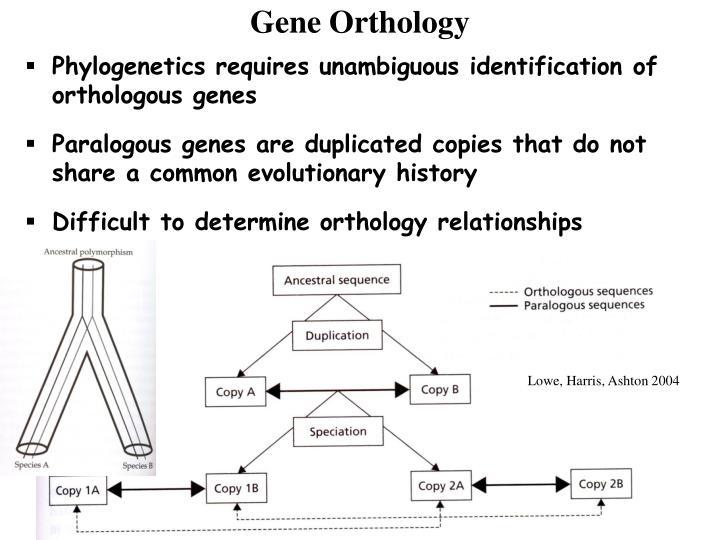 Gene Orthology