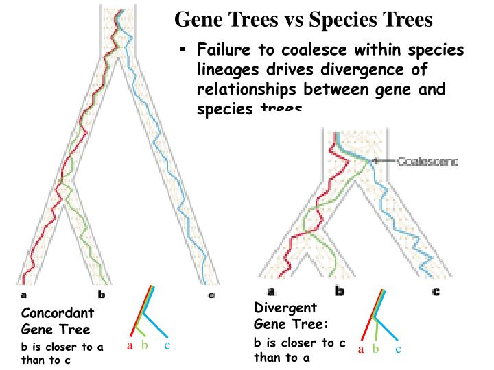 Gene Trees vs Species Trees
