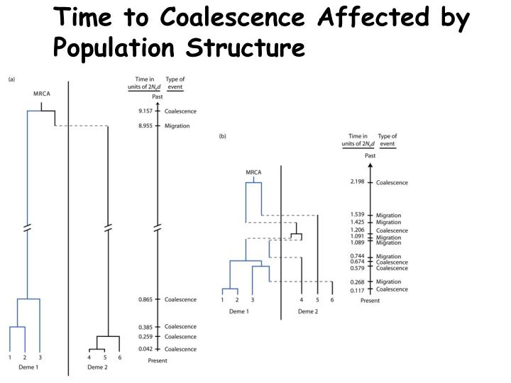 Time to Coalescence Affected by Population Structure