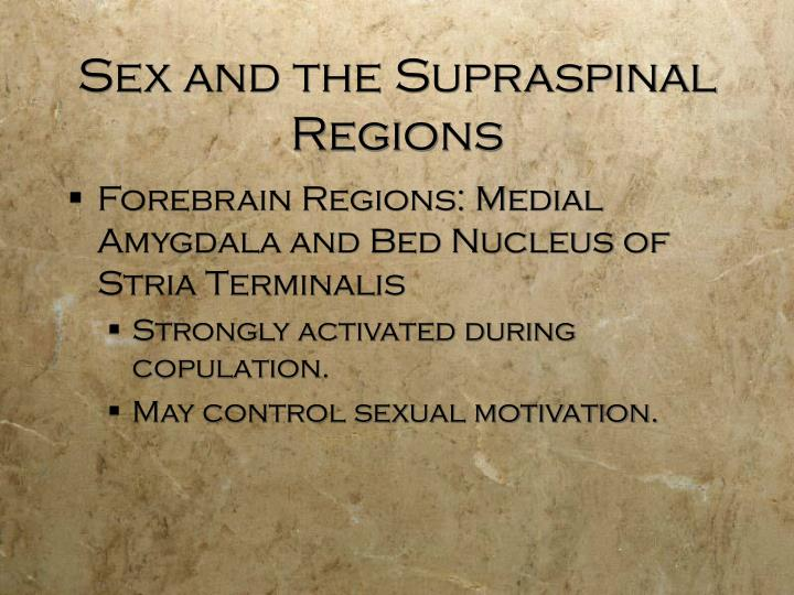 Sex and the Supraspinal Regions