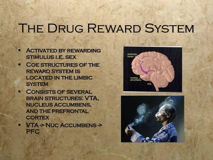The Drug Reward System