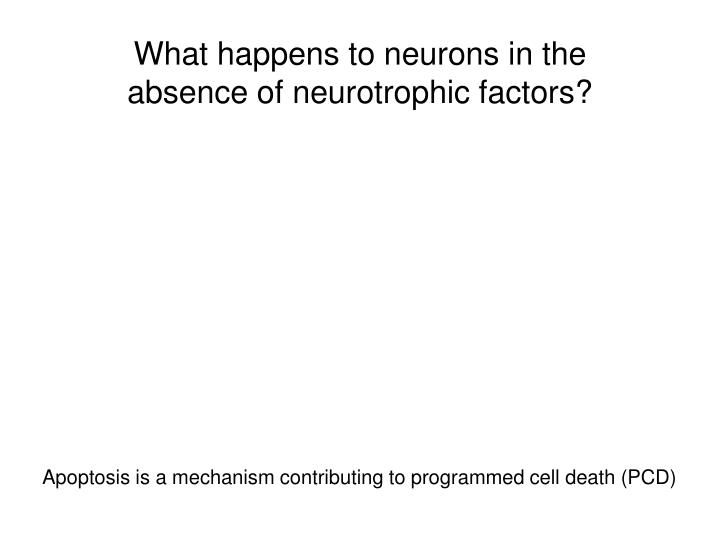 What happens to neurons in the absence of neurotrophic factors?