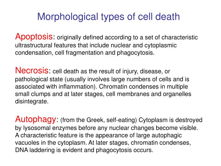 Morphological types of cell death