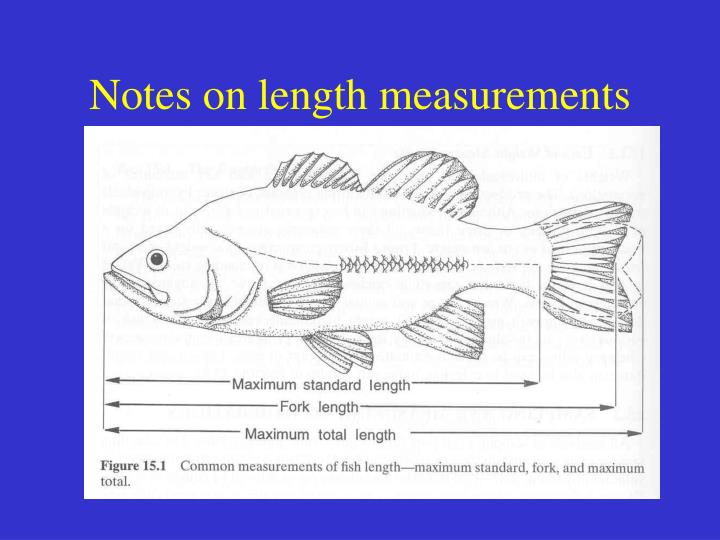 Notes on length measurements