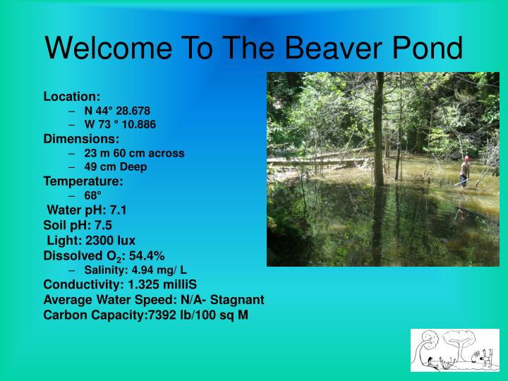 Welcome To The Beaver Pond