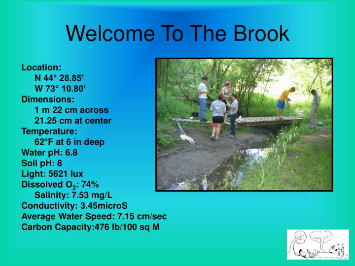Welcome to the brook