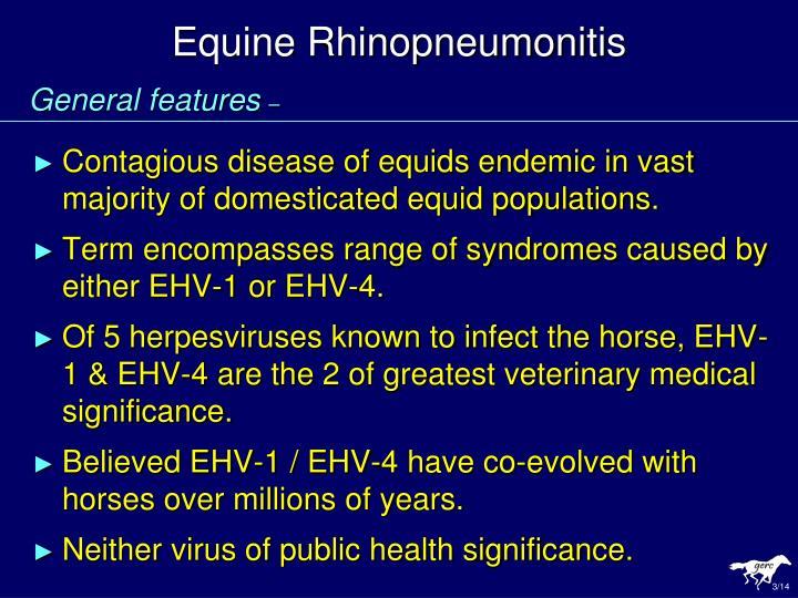 Equine rhinopneumonitis