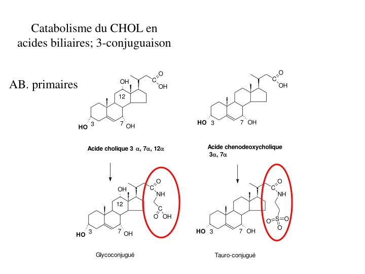 Catabolisme du CHOL en acides biliaires; 3-conjuguaison
