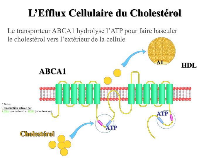L'Efflux Cellulaire du Cholestérol