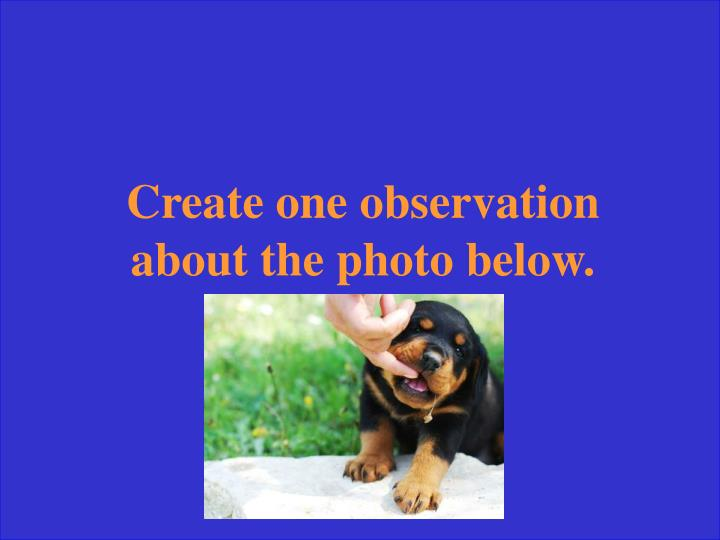 Create one observation about the photo below.