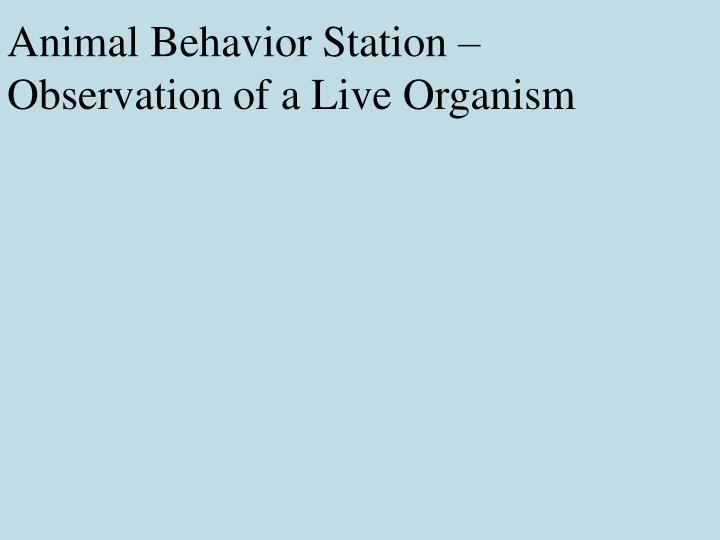 Animal Behavior Station – Observation of a Live Organism