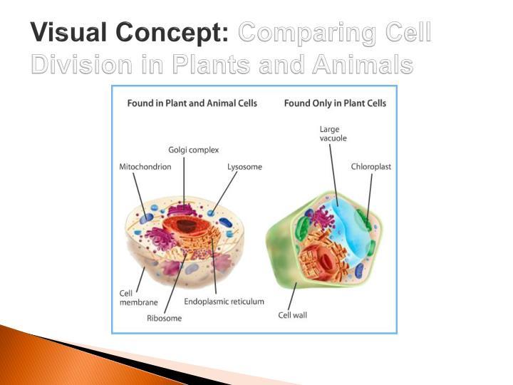 Visual Concept: