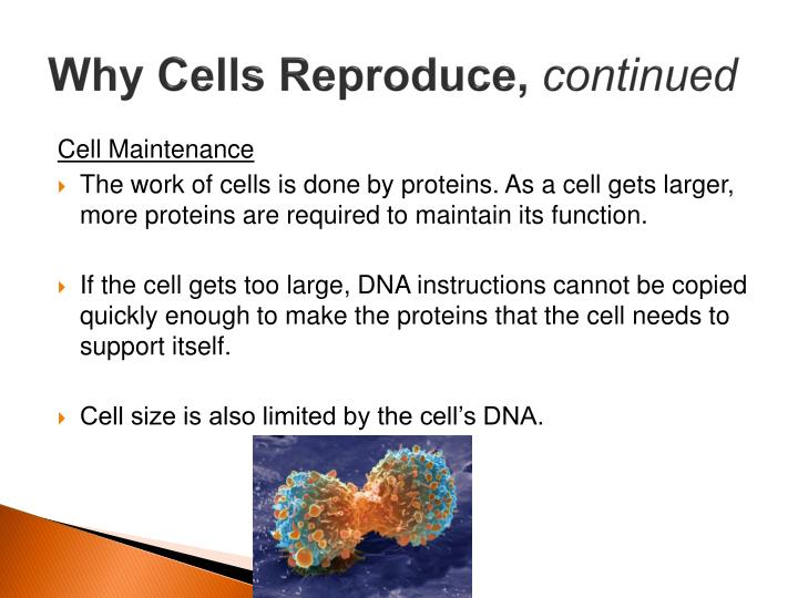 Why Cells Reproduce,