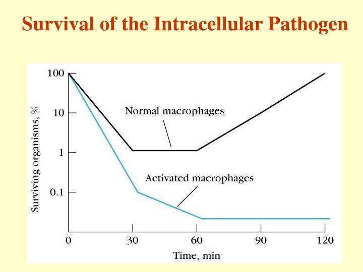Survival of the Intracellular Pathogen