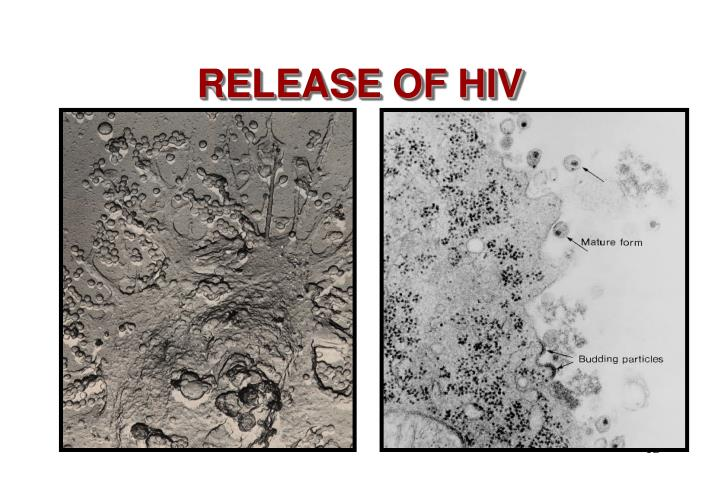 RELEASE OF HIV