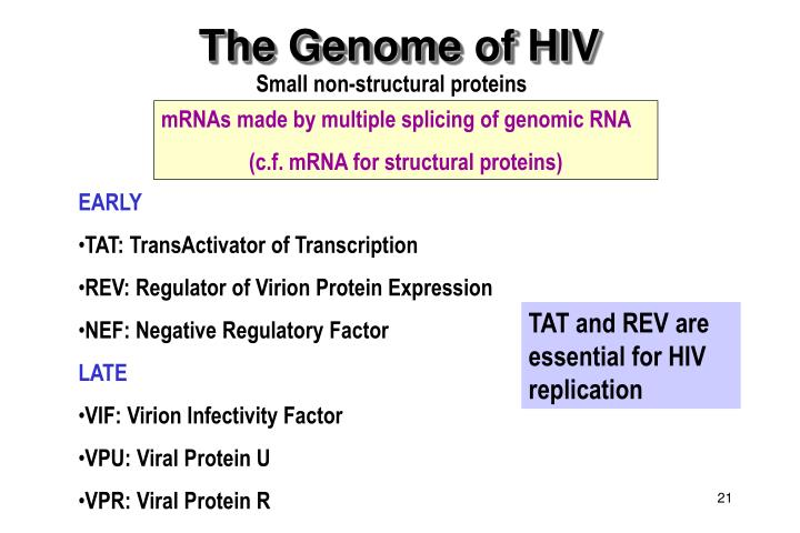 The Genome of HIV