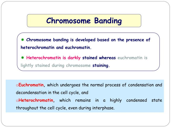 Chromosome Banding