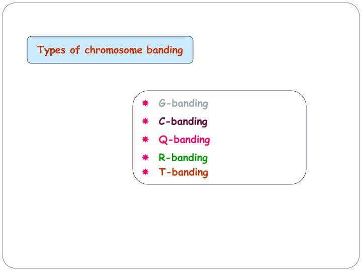 Types of chromosome banding