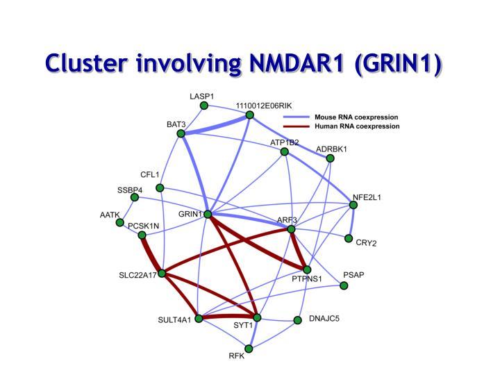 Cluster involving NMDAR1 (GRIN1)