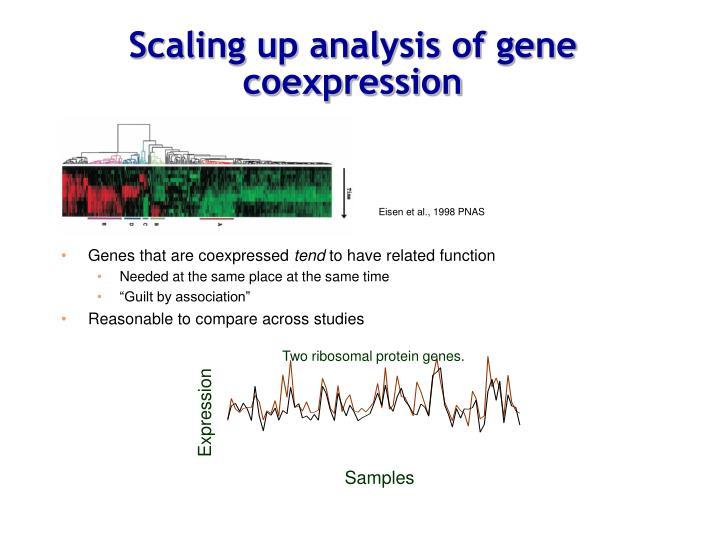 Scaling up analysis of gene coexpression