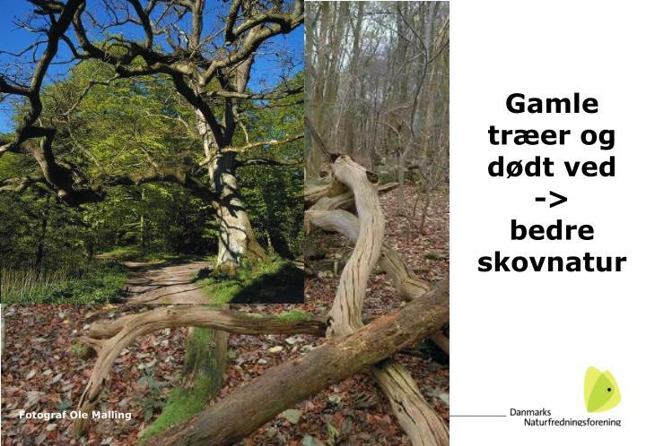 Gamle træer og dødt ved