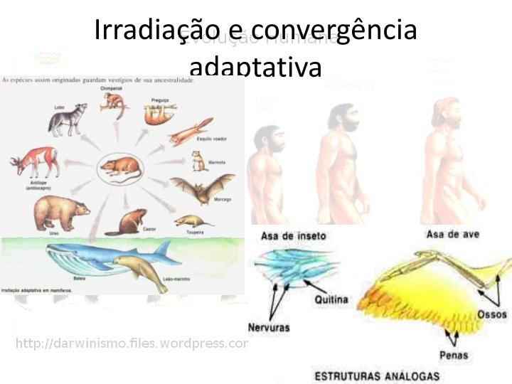 Irradiação e convergência adaptativa