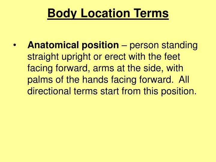 Body location terms