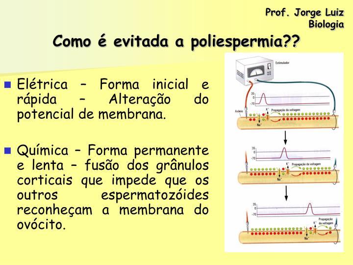 Prof. Jorge Luiz