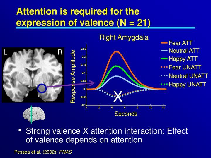 Right Amygdala