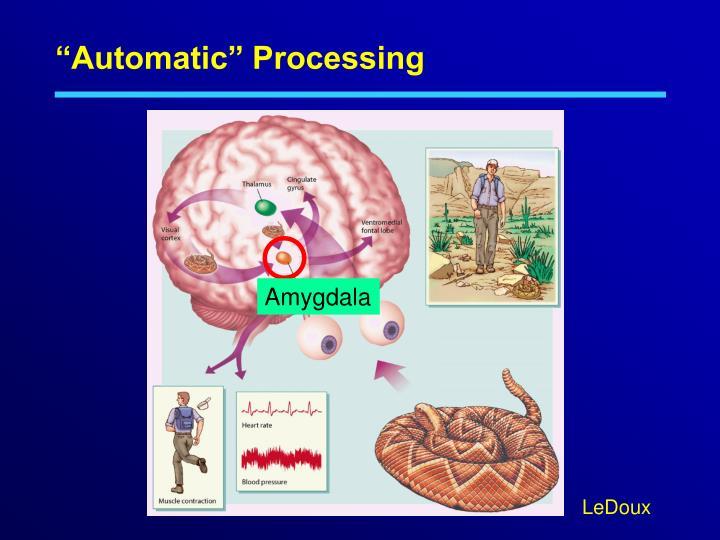 """""""Automatic"""" Processing"""