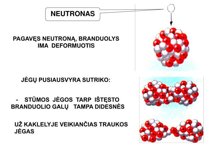 NEUTRONAS