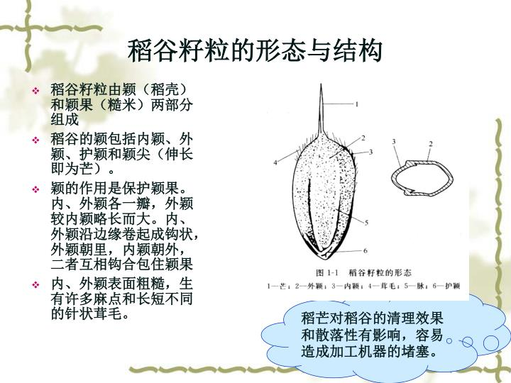 稻谷籽粒的形态与结构